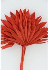 Dried Palm Sun 6pc Red Bunch x 3