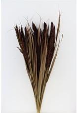 Dried Ornamental Grass Brown Bunch x 4