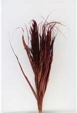 Dried Ornamental Grass Red Bunch x 4