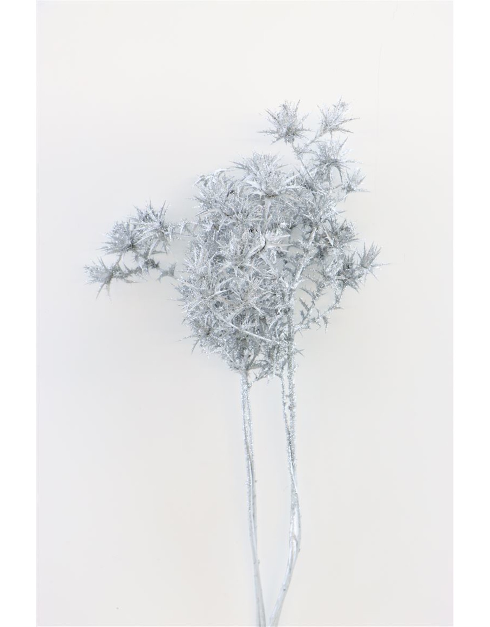 Dried Cardi Spray Silver Bunch x 5