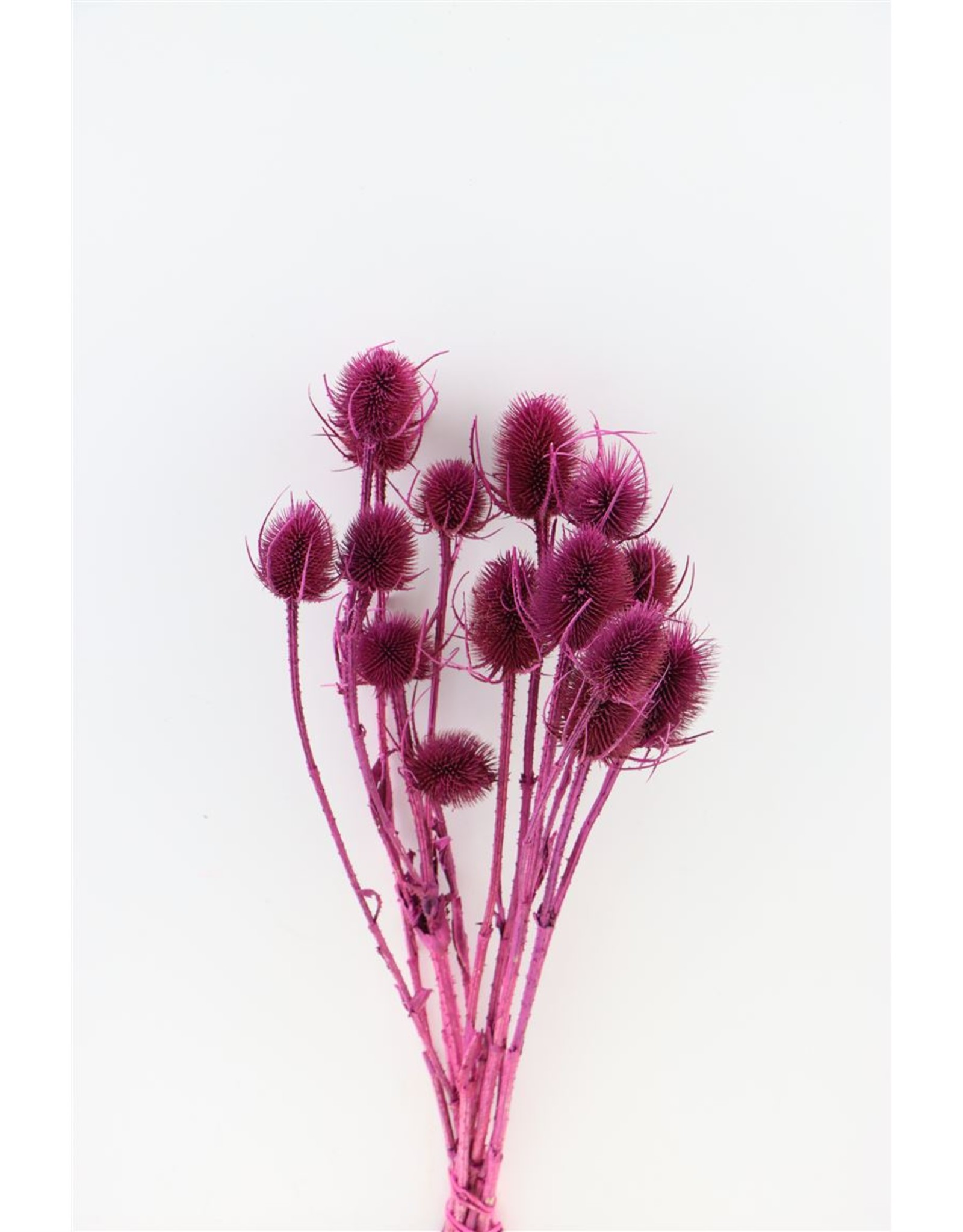 Dried Thistle Cerise Bunch x 3