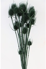 Dried Thistle Fire Green Bunch x 3