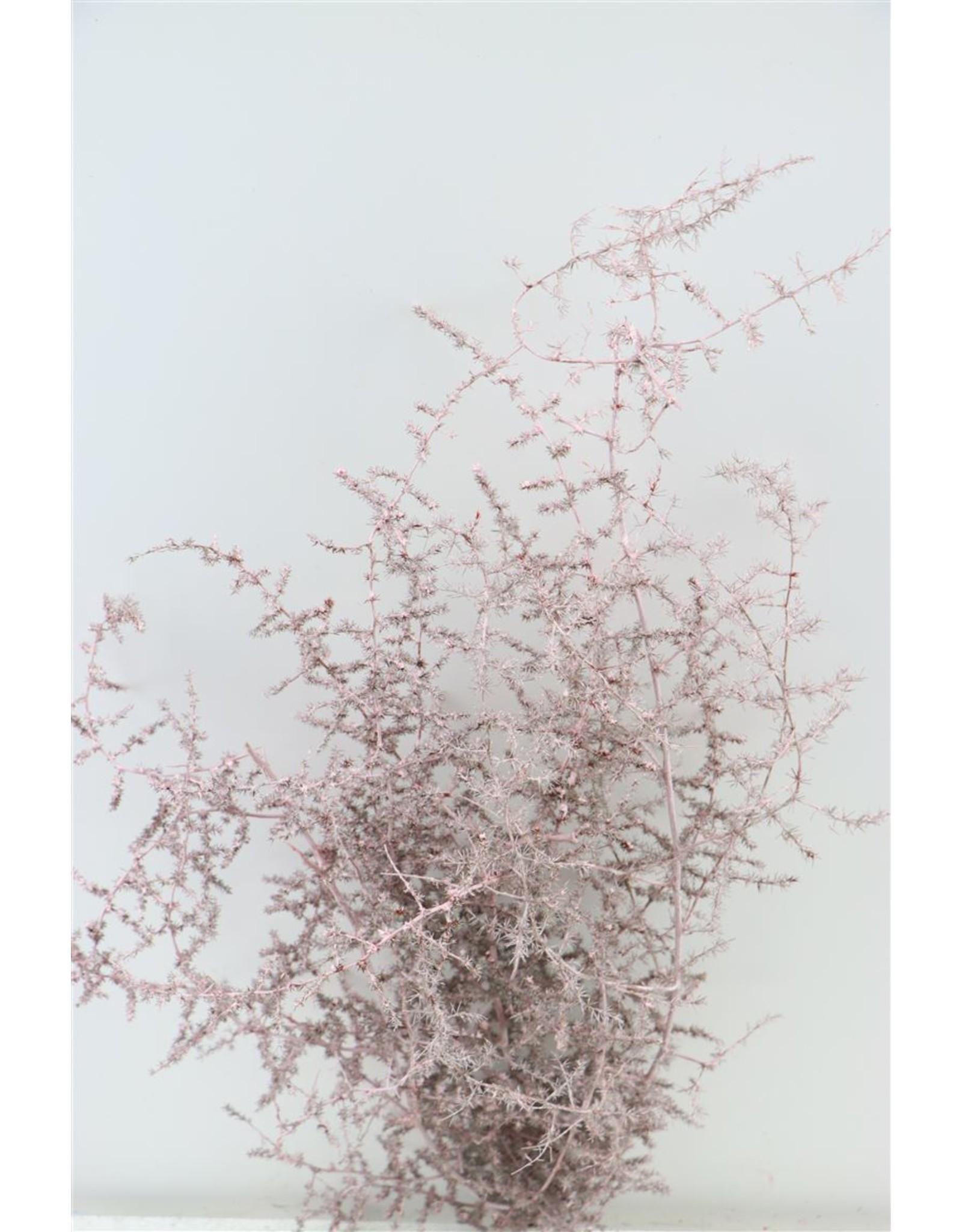 Dried Asparagus Wild L. Pink Bunch x 2