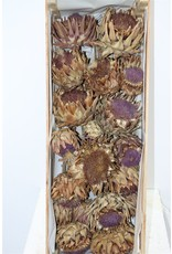Dried Cynara Natural 20pcs Box x 1