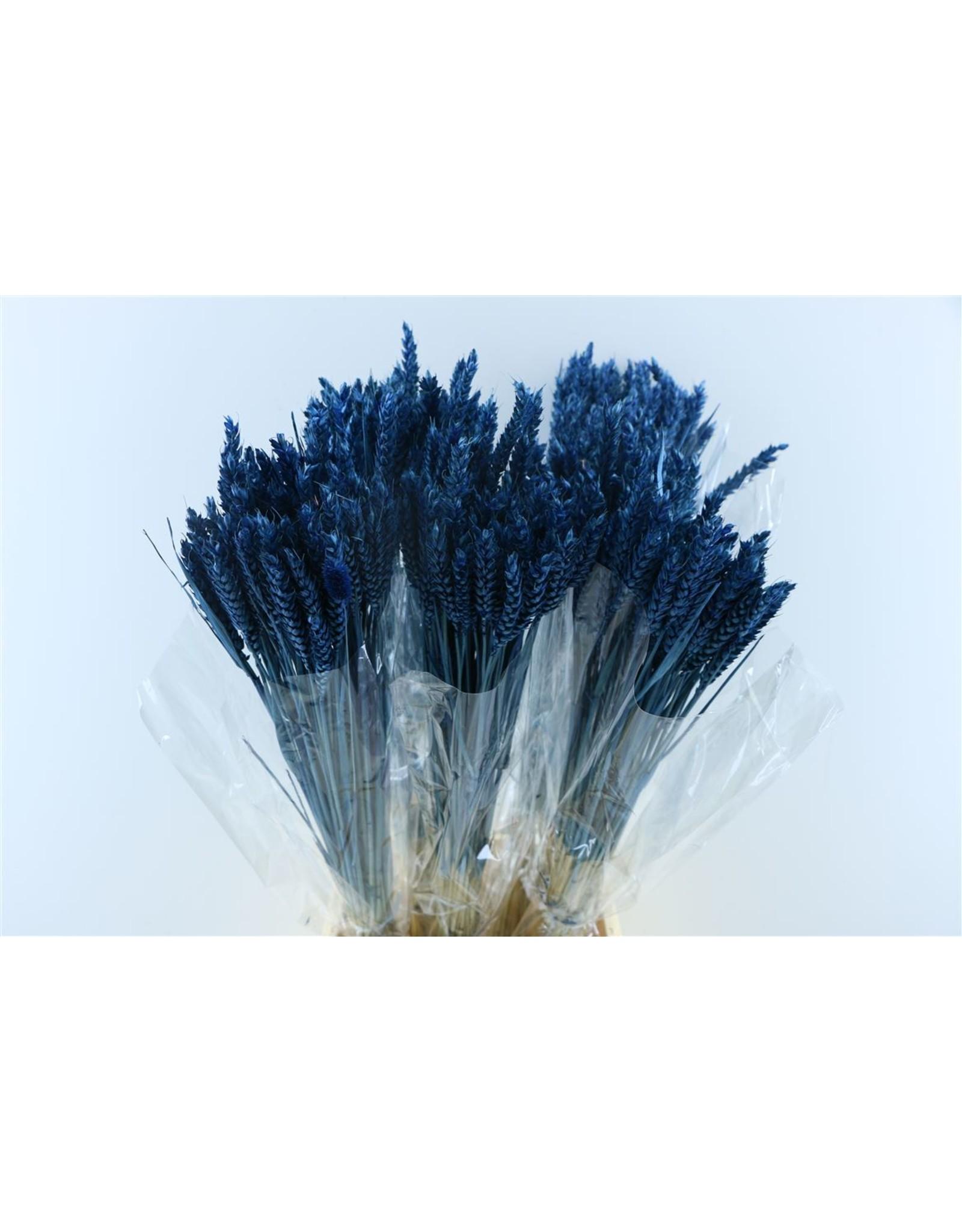 Dried Triticum Donkerblauw Bunch x 2