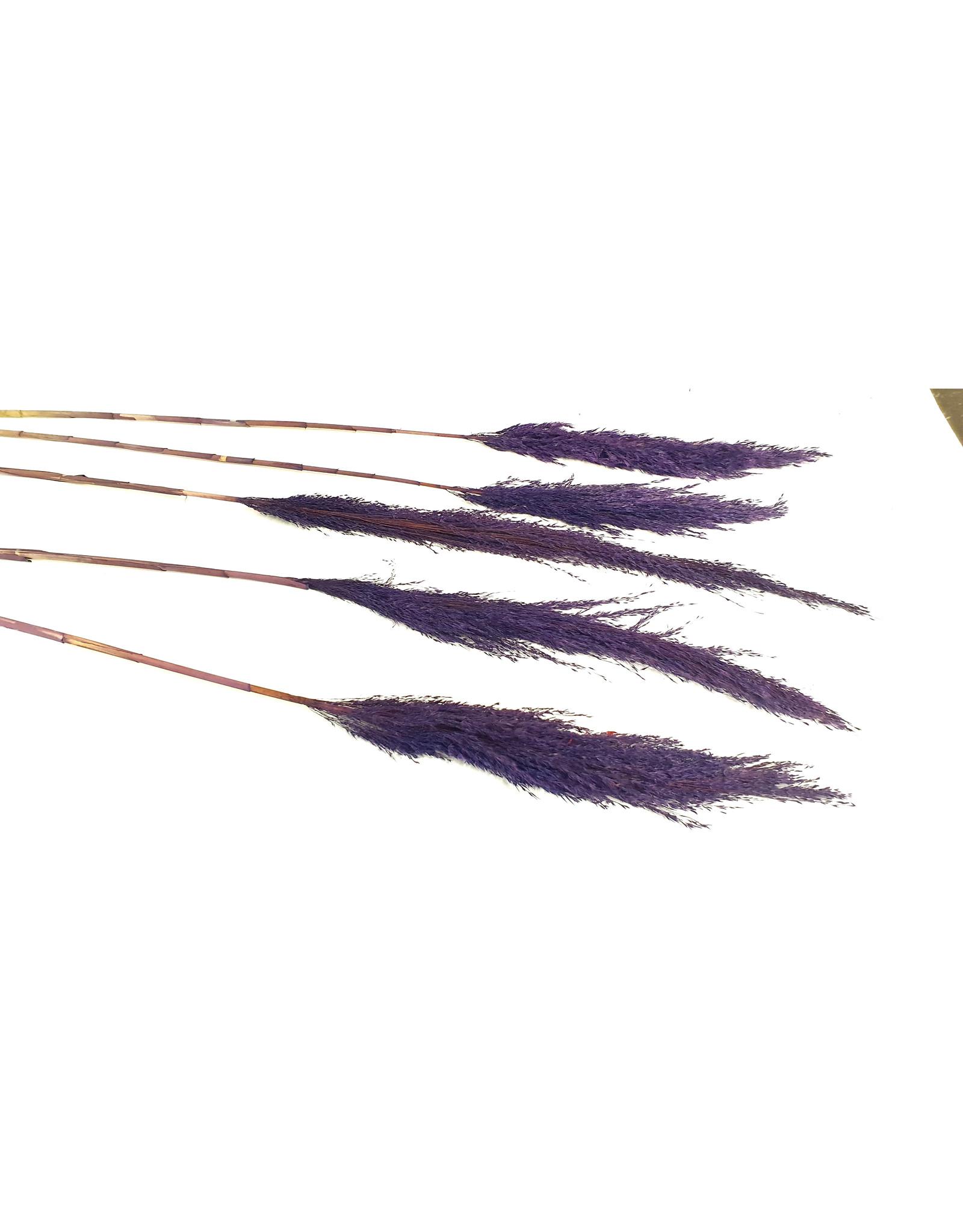 Pampas Grass lenght 120cm 5 stem per bunch Purple x 6