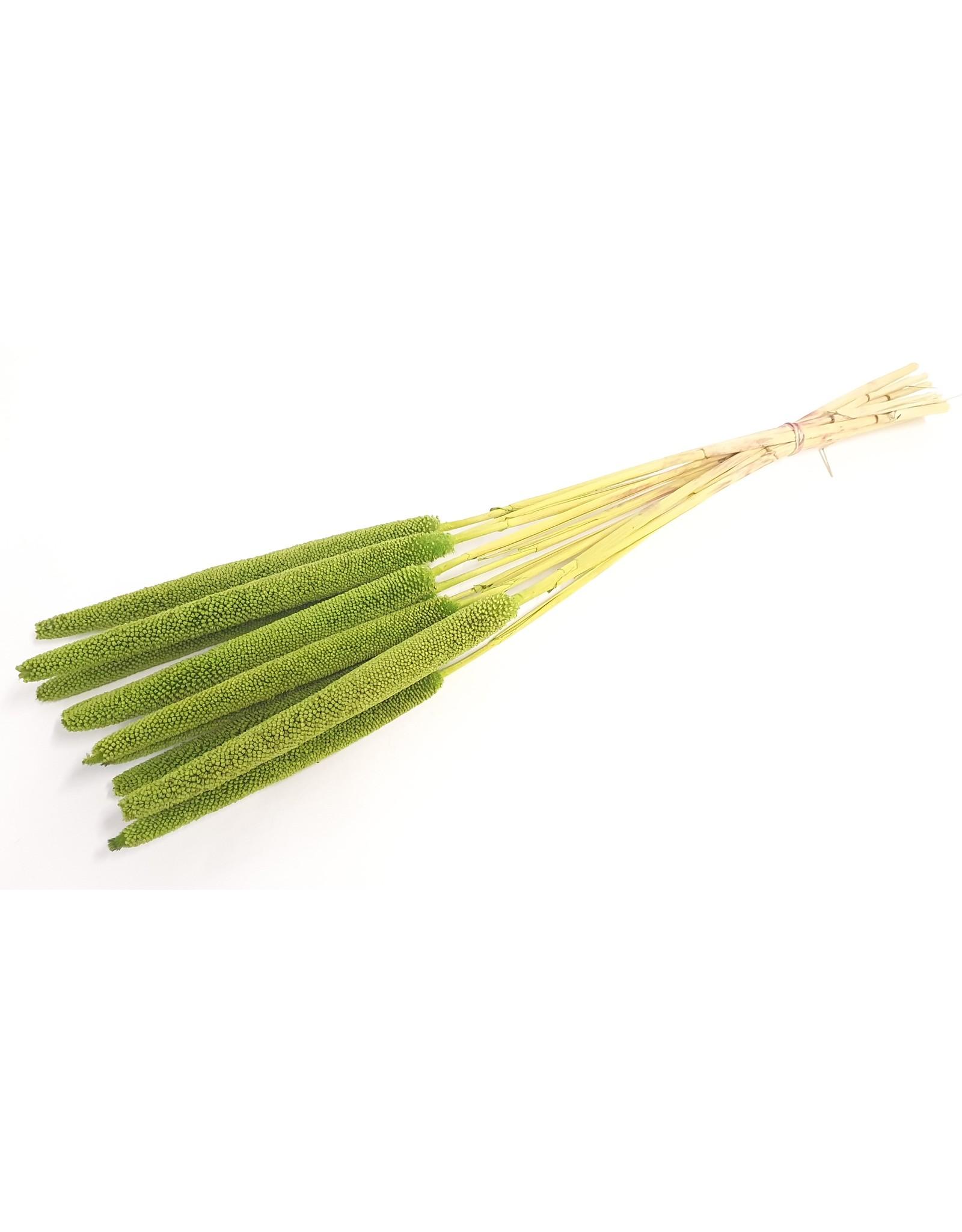 Babala on natural stem Hot light green x 100