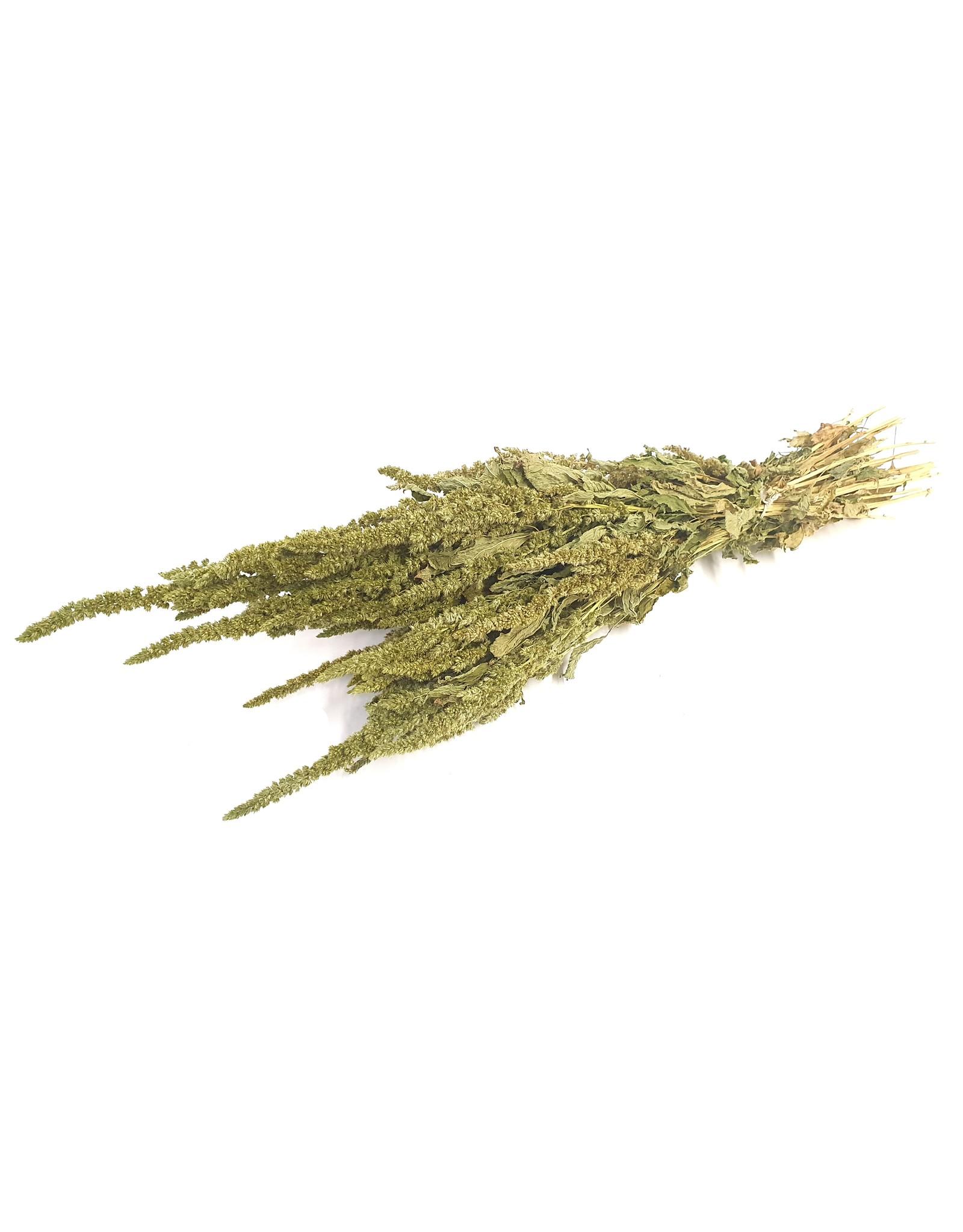 Amaranthus per bunch Green x 6