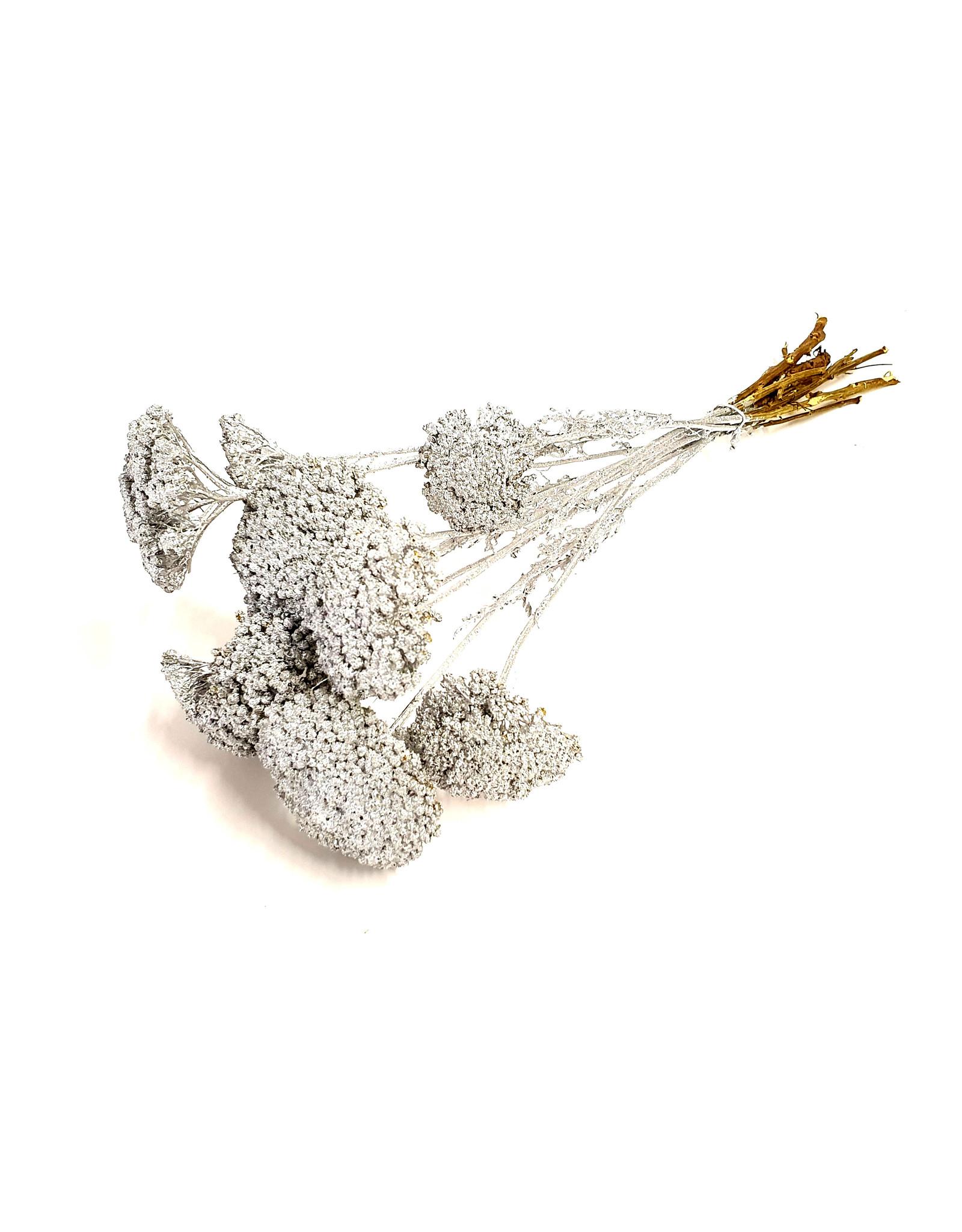 QC Achillea per stem Silver x 100