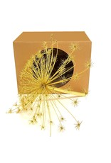 QC Heracleum head per pc 40cm in vensterbox Gold + Glitter x 1