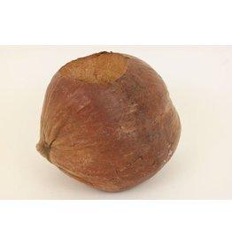 Plant. Coconut Retro ± D18 x 6