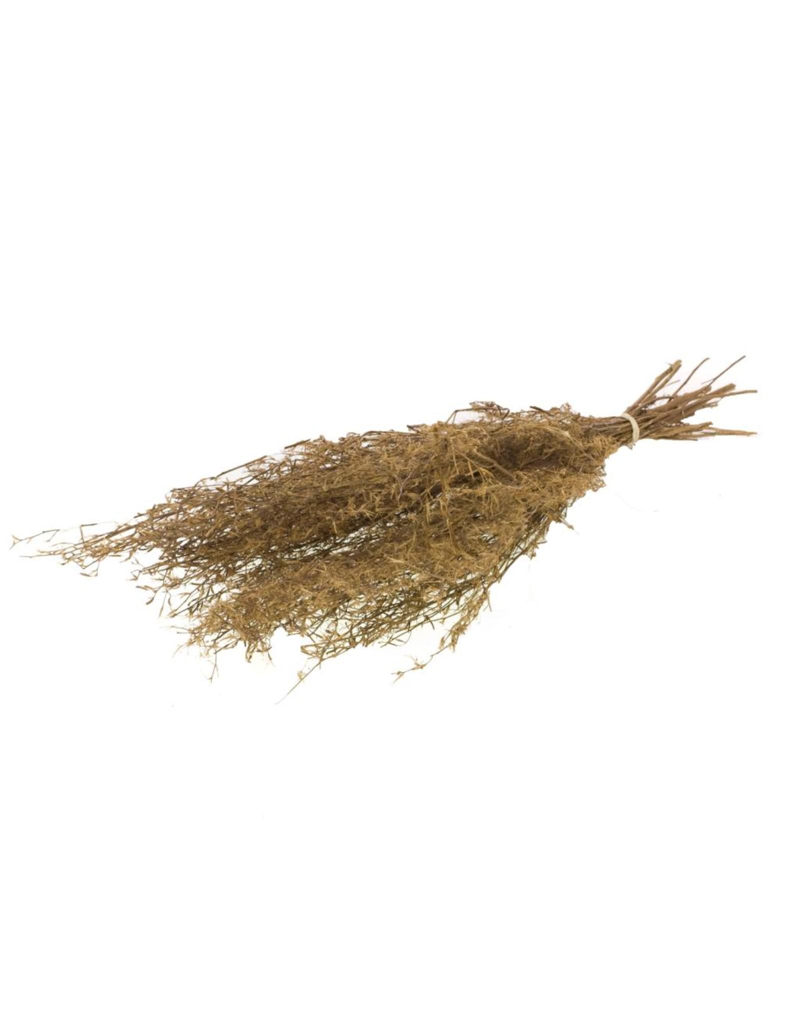 LDD Chilli grass 100gr 60-70cm natural x 24