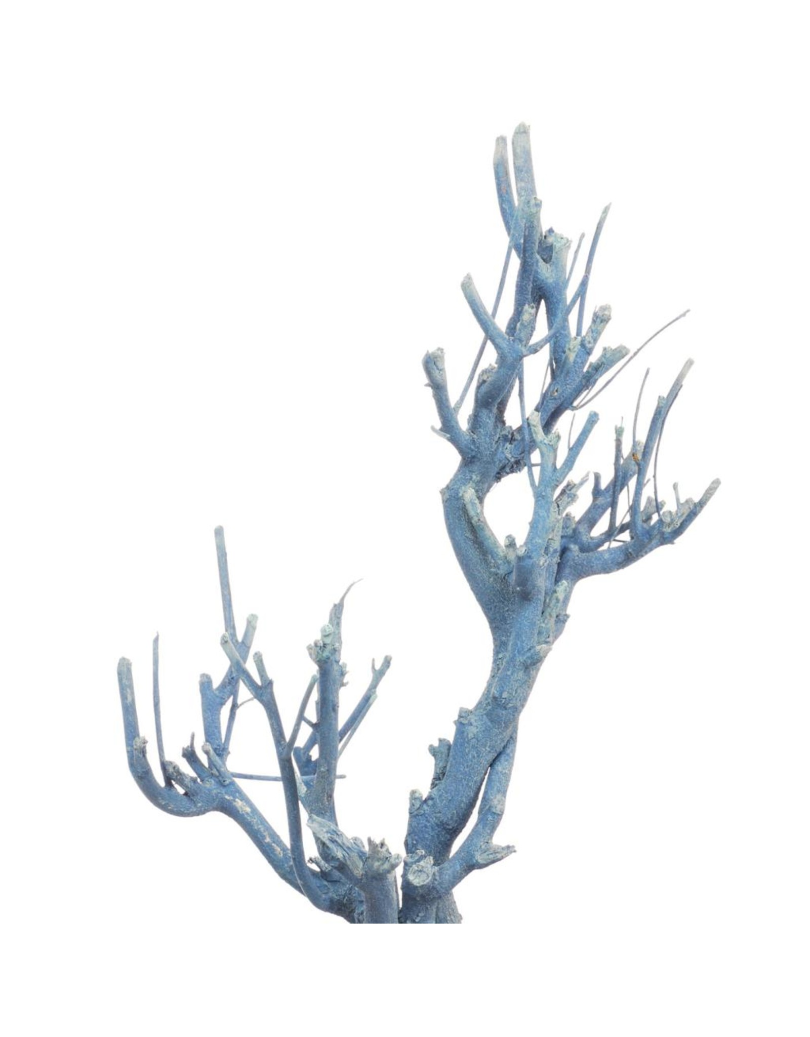 LDD John branch NMG blue wash x 20