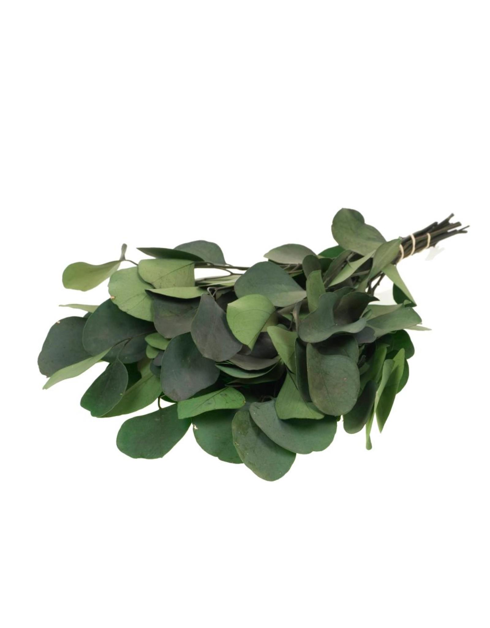 LDD Eucalyptus populus preserved moss green x 40