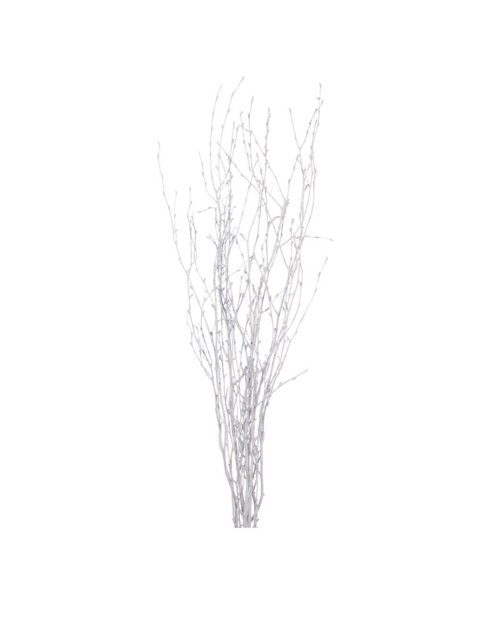 LDD Birch 75cm 5pc SB white x 6