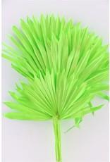 GF Dried Palm Sun 6pc Apple Green Bunch x 3