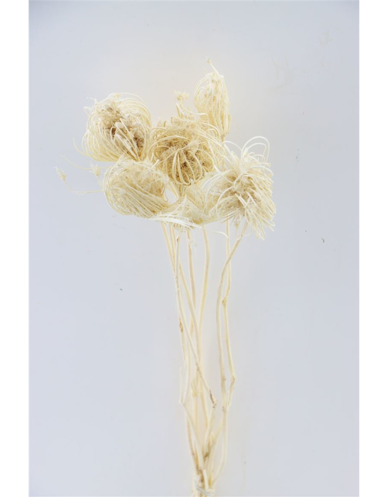 GF Dried Dill Seed Bleached Bunch x 2