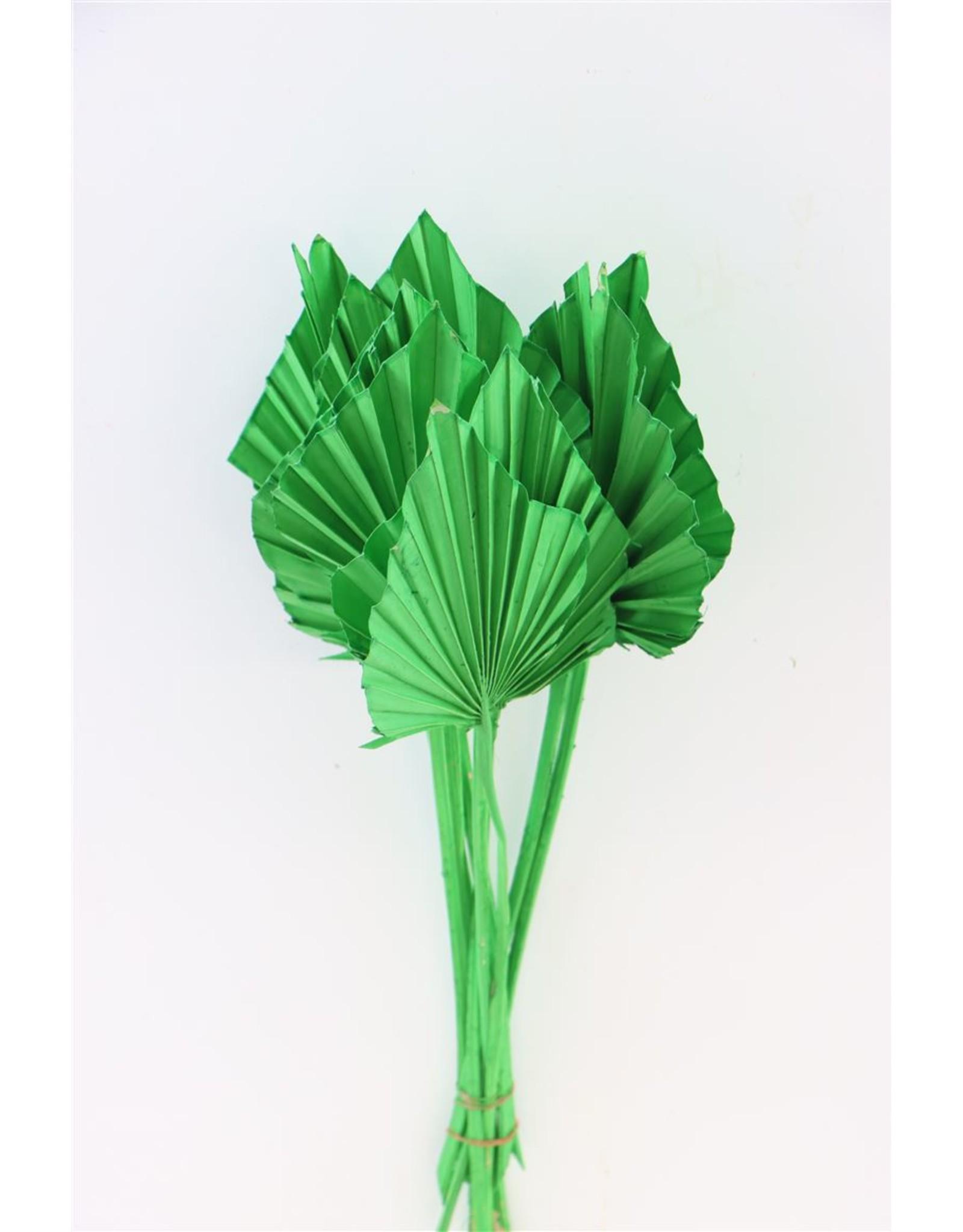 GF Dried Palm Spear 10pc D. Green Bunch x 2