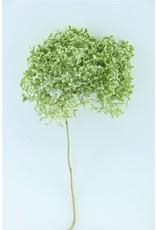 GF Dried Hydrangea Nat. Green 50cm P. Stem x 2