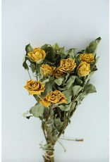 GF Dried Roses Spray Yellow 10pcs Scented x 8