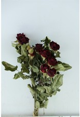 GF Dried Roses Spray Burgundy 10pcs Scented Bunch x 8