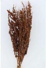 GF Dried Rumex Crisp (krulzuring) Bunch x 5