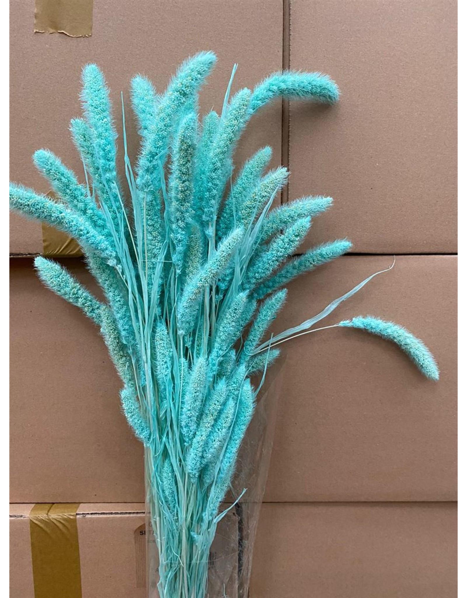 GF Dried Setaria Aqua Blue Bunch x 2