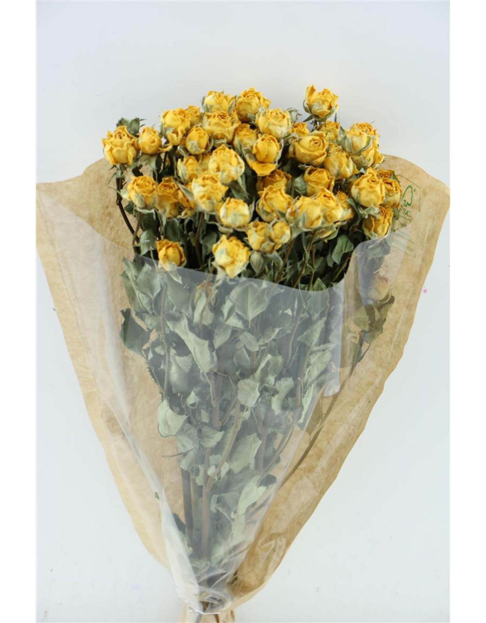 GF Dried Roses Spray 50cm Yellow 10pcs x 2