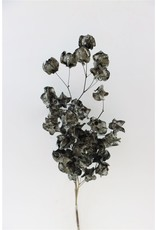 GF Dried Bougainvillea 45cm Black Bunch x 5