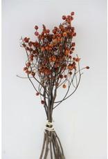 GF Dried Rose Hip Forest Queen 35cm Bunch x 2