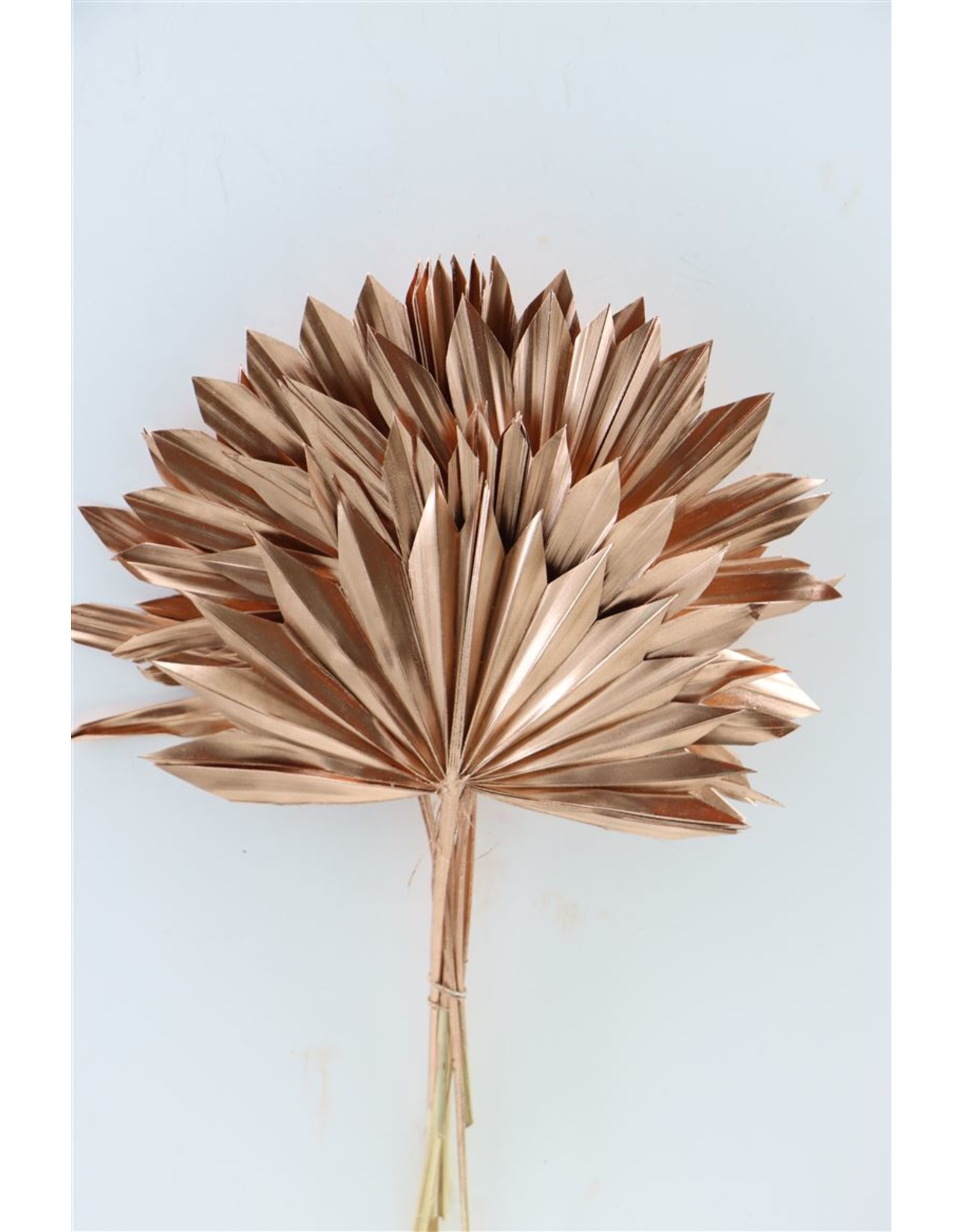 GF Dried Palm Sun 6pc Copper Bunch x 3