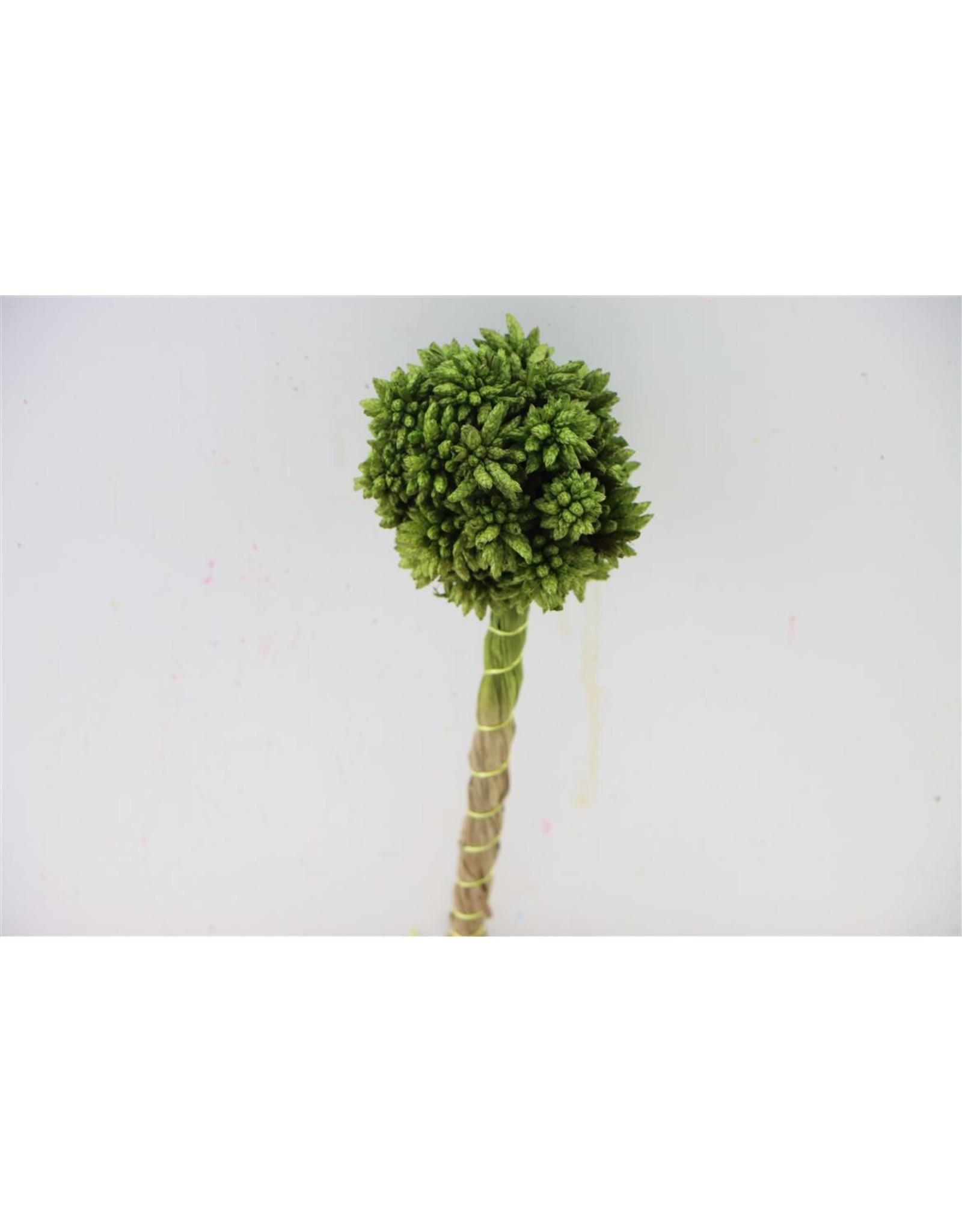 GF Dried Kai Mang Da Grass Green Bunch x 40