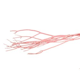 GF Mitsumata Fl. Light Pink 3pcs Bunch x 5