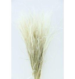 GF Dried Stypa Pennata Naturel Bunch x 5
