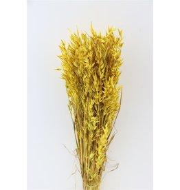 GF Dried Avena Yellow Bunch x 4