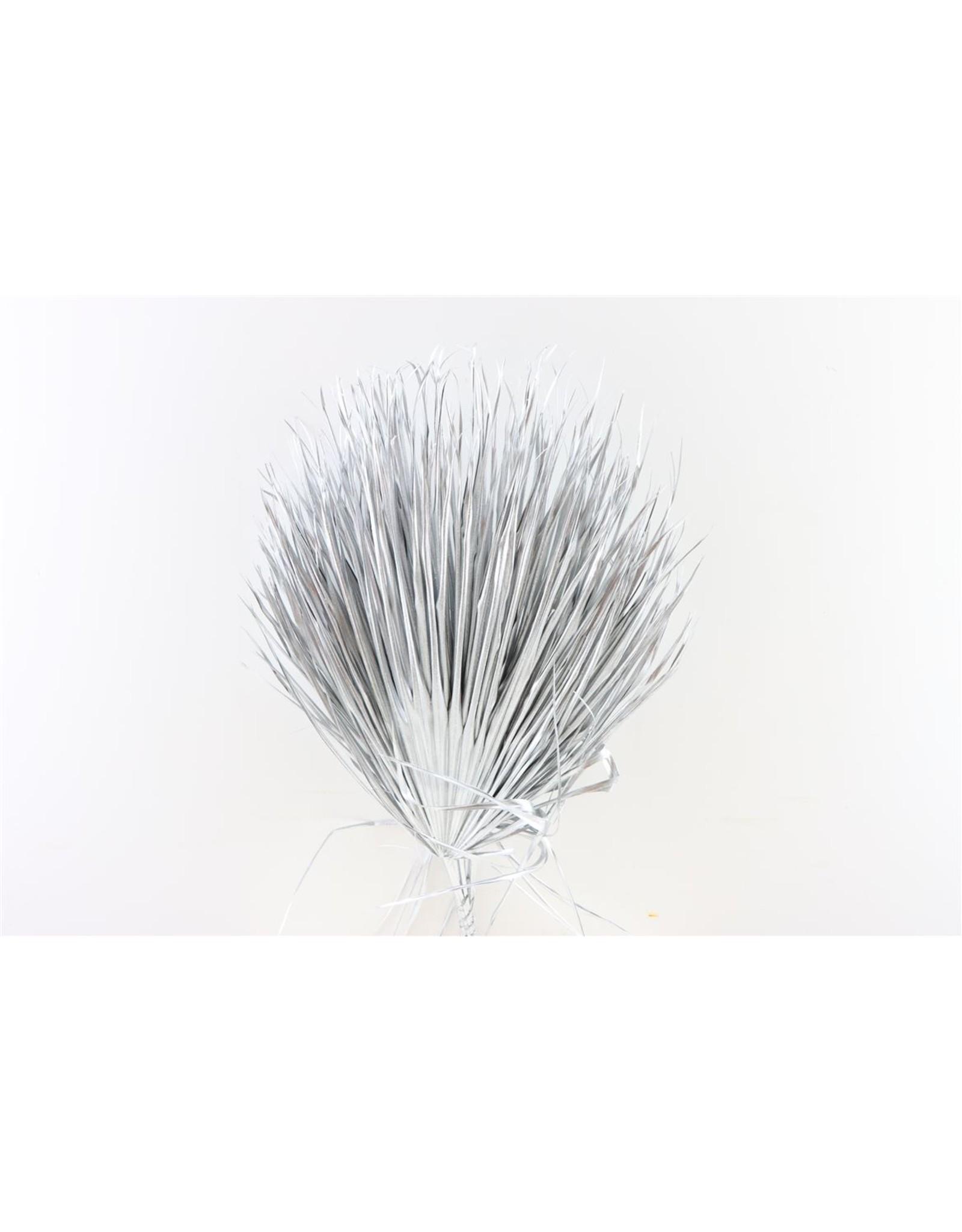 GF Dried Chamaerops (10tk) Metalic Silver Bunch x 2