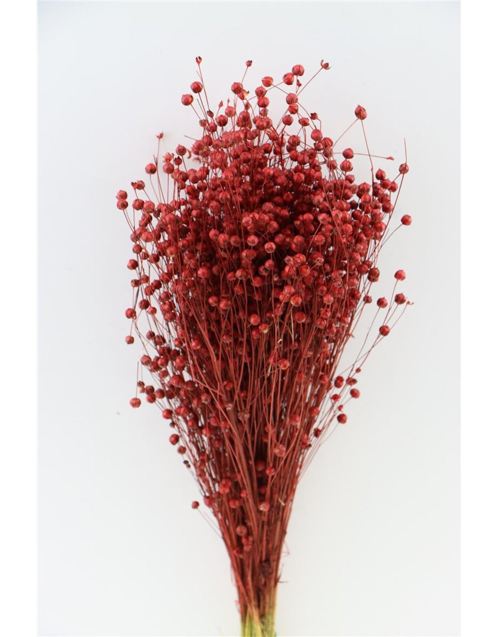 GF Dried Lino Vlas Red Bunch x 5