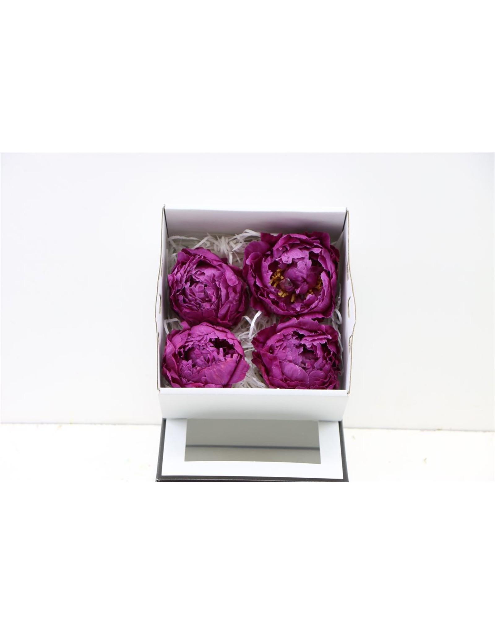 GF Peony Freeze Dried Bordeaux 4pc Box x 4