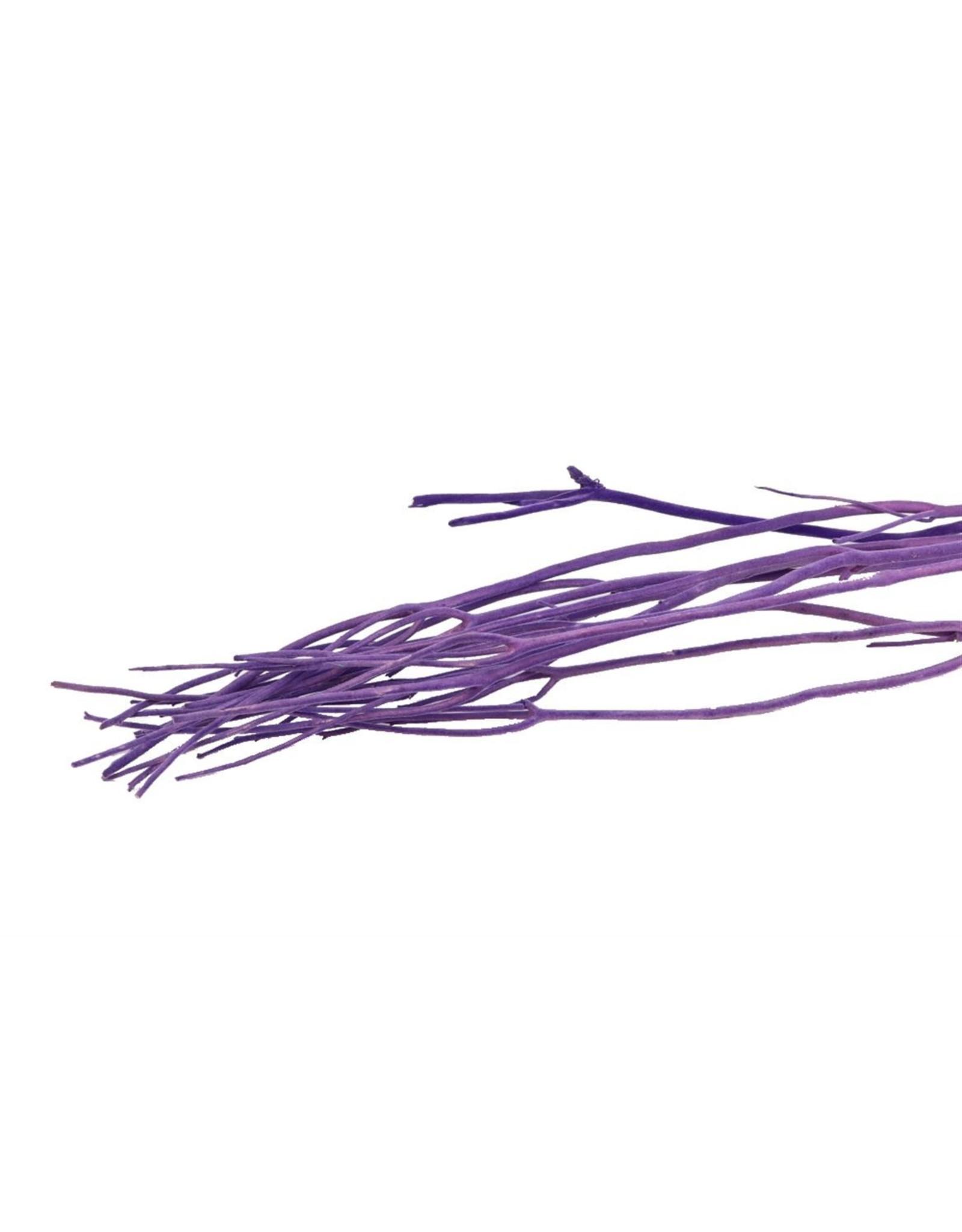 GF Mitsumata Fl. Lavendel 3pcs Bunch x 5