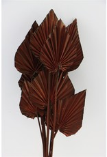GF Dried Palm Spear 10pc Brown Bunch x 3