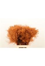 GF Dried Stipa Feather Choco P. Stem x 50