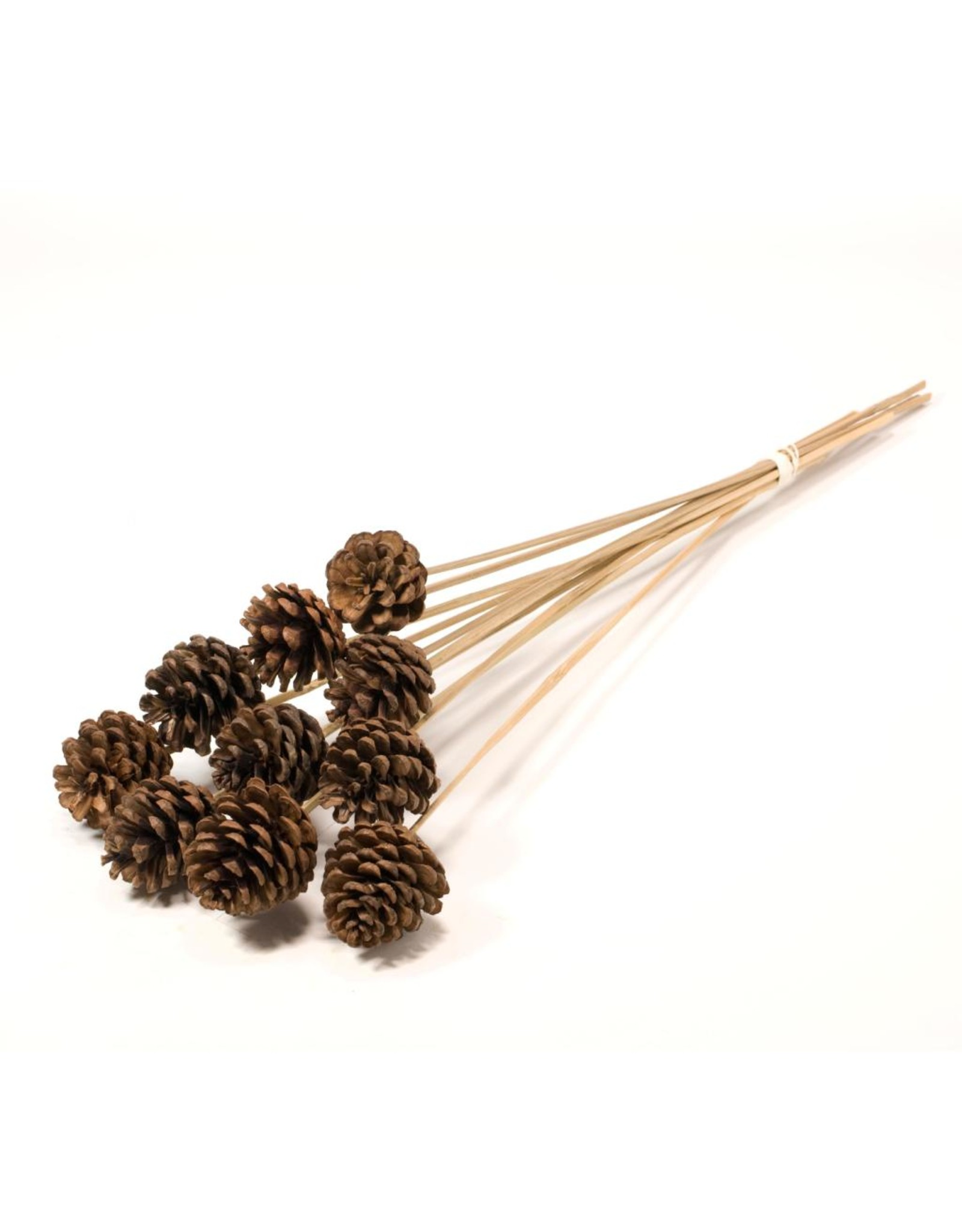 LDD Pine cone 4-5cm o/s 10pc natural x 15