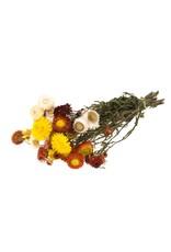 LDD Helichrysum SB natural mix x 5