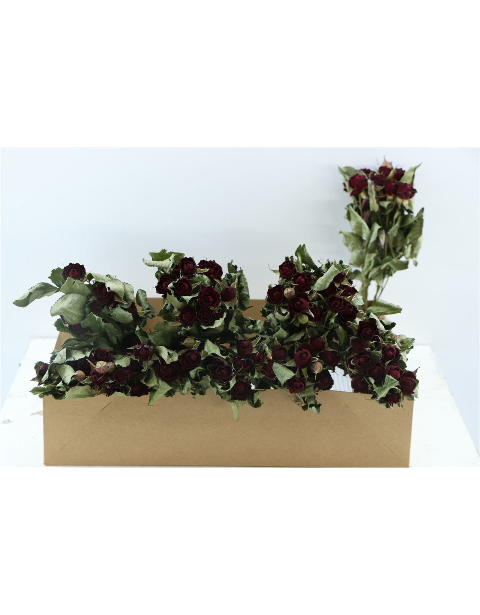 GF Dried Roses Spray Burgundy 10pcs Sc x 2