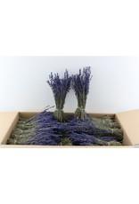 GF Dried Lavendel Dark Blue 150gram Pbs x 5
