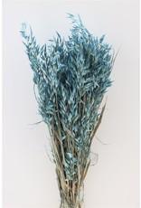 GF Dried Avena L. Blue Bunch x 4