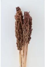 GF Dried Sorghum 6pc Brown Bunch x 2