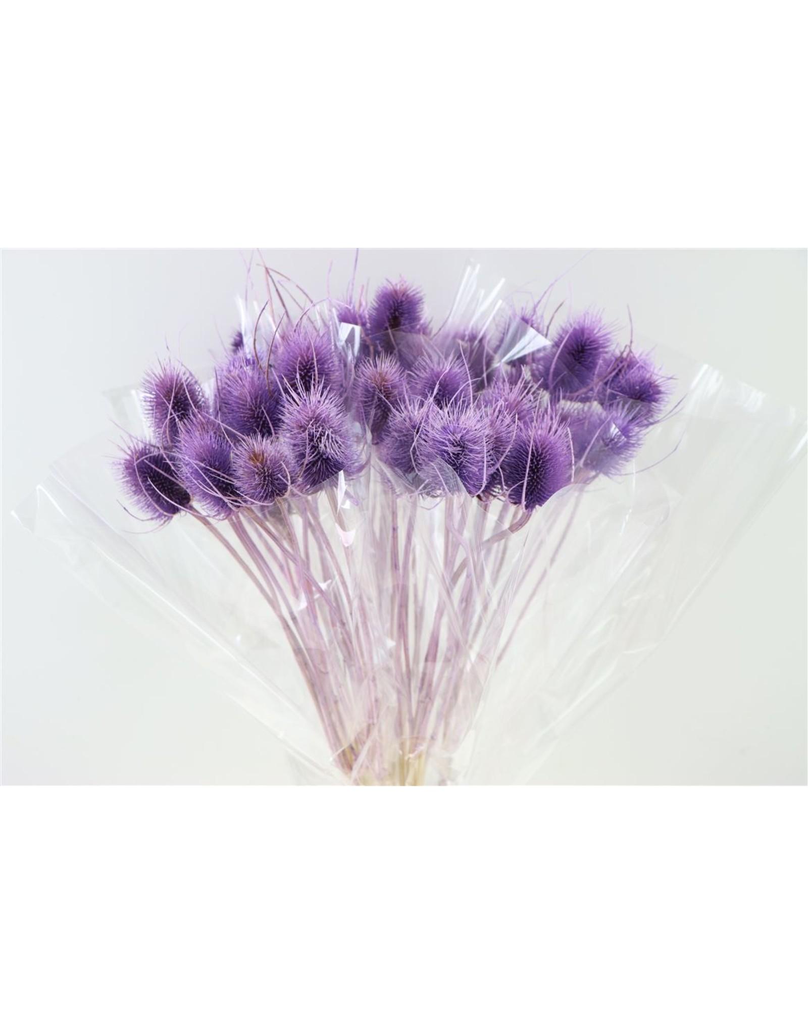 GF Dried Cardi Pastel Purple Bunch x 5