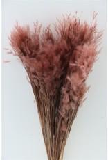 GF Dried Pluminha D. Brown Bunch x 5