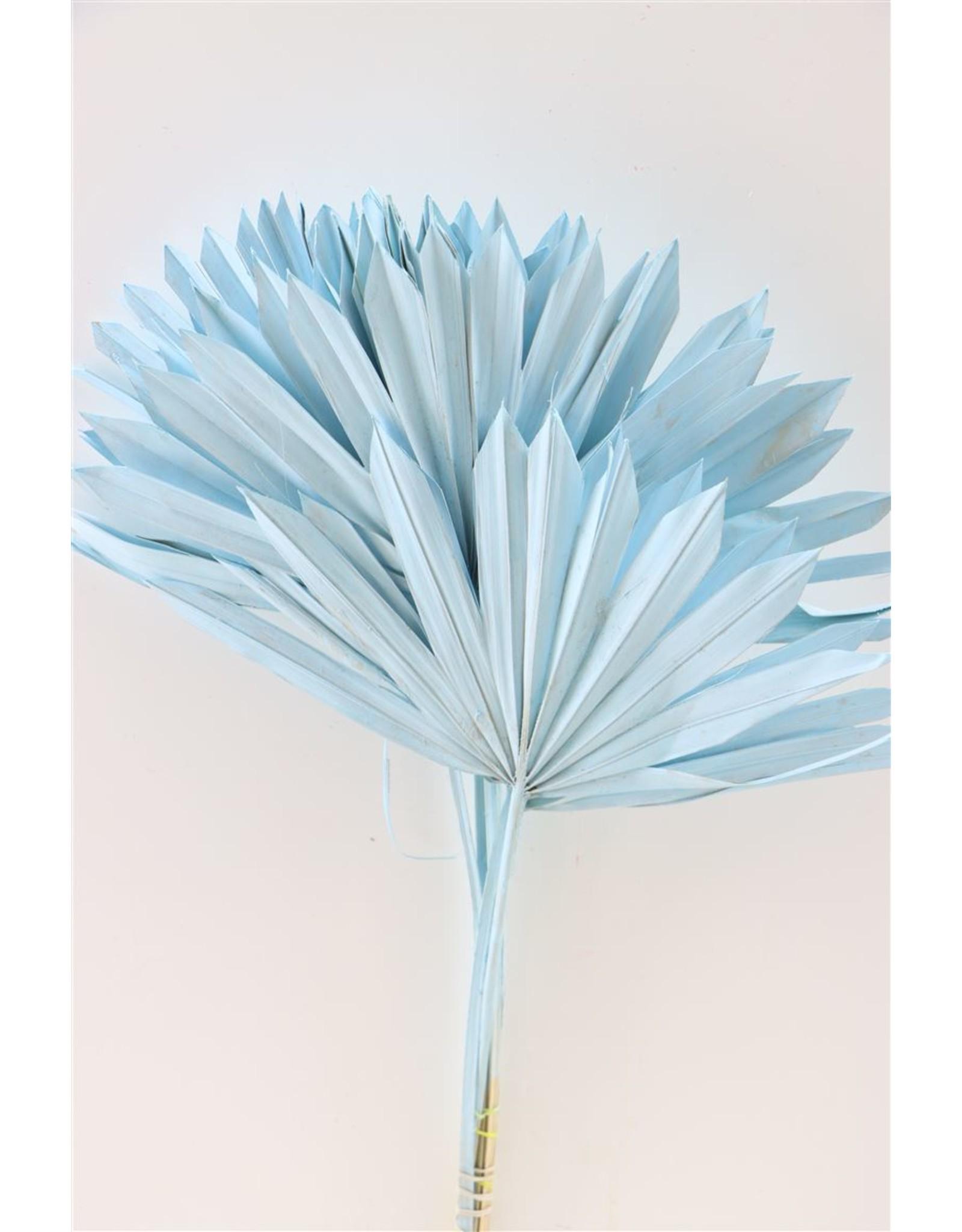 GF Dried Palm Sun 6pc Light Blue Pbs x 3